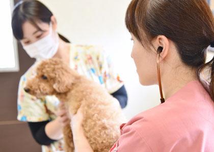 犬身体検査