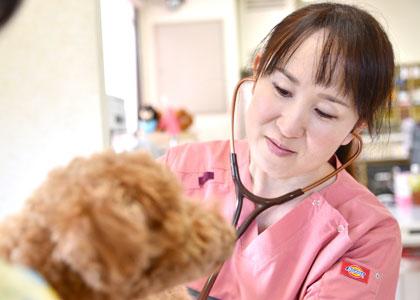 獣医師診療