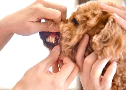 歯科の診断・検査