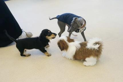 他犬との関わり、遊び