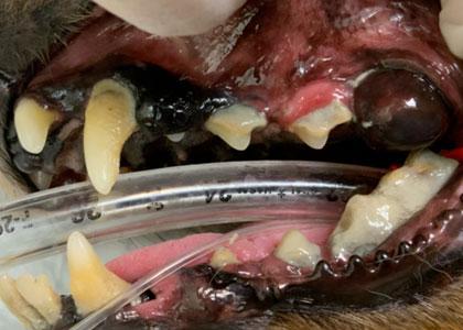 口腔内腫瘍